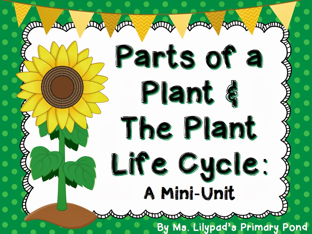 Parts Of A Plant  U0026 The Plant Life Cycle