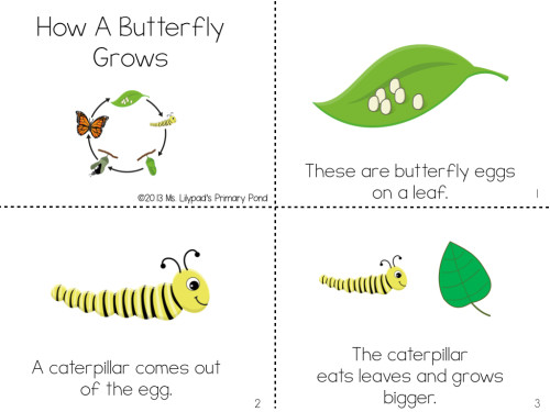 I integrate our science unit on life cycles into guided reading with these butterfly life cycle leveled texts!