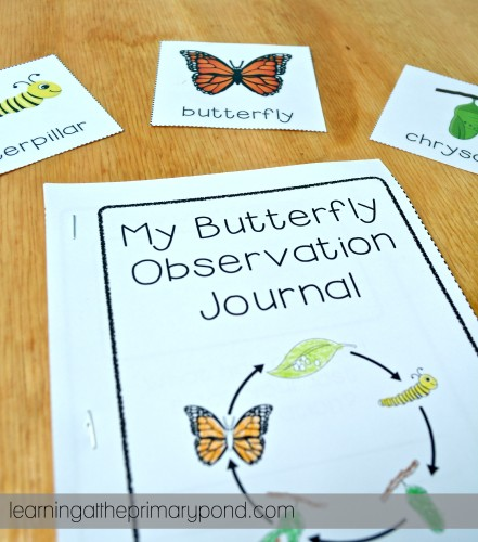 My students write down their observations about our classroom butterflies in this journal! I also give them the vocabulary cards to support them with the academic vocabulary.