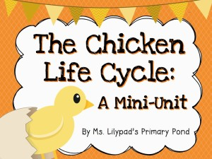 preschool life cycle of a chick