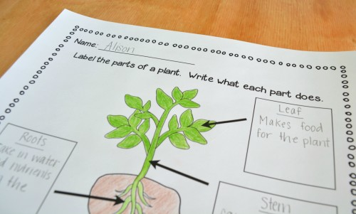 Have students color in the picture and label the parts of a plant!