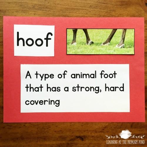 Reindeer vocabulary photo