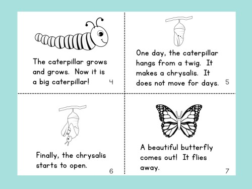 Butterfly Life Cycle Book Page 2